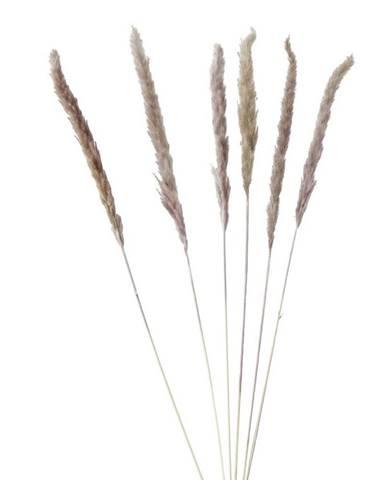 Umelá Rastlina Pampasgrass, V: 85cm